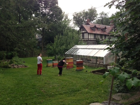 This was about as close to the beehives as I wanted to get: taking pictures of a braver woman taking pictures of bees.
